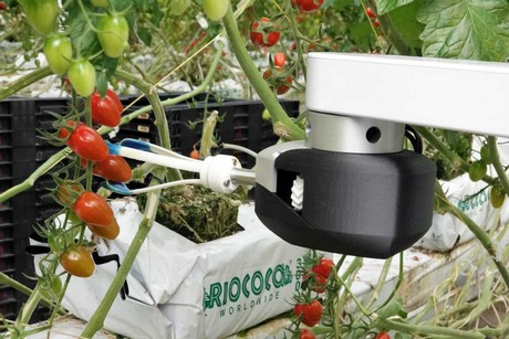 The robot that picks ripe tomatoes