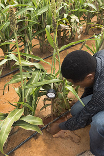 Digital Innovations to Improve Soil Health
